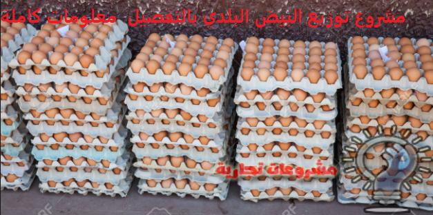تجارة البيض البلدي