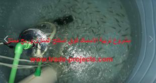 مشروع تربية الاسماك فوق اسطح المنازل