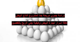 دراسة جدوي مشروع انتاج البيض