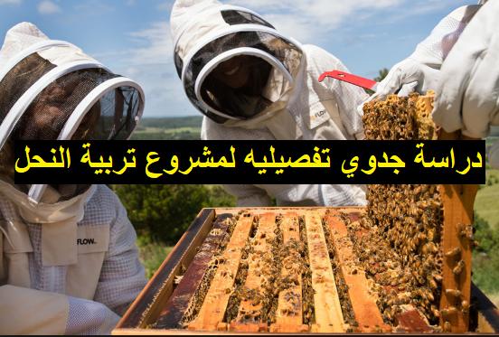 دراسة جدوي مشروع تربية النحل