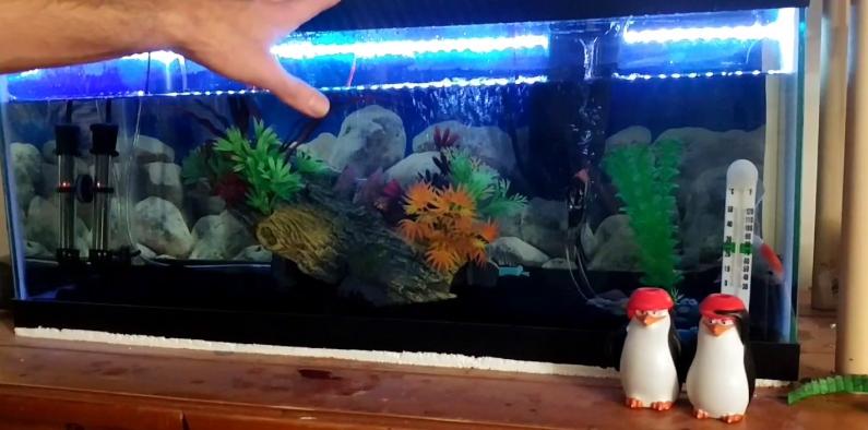 مشروع تربية السماك