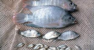 مشروع تربية السمك
